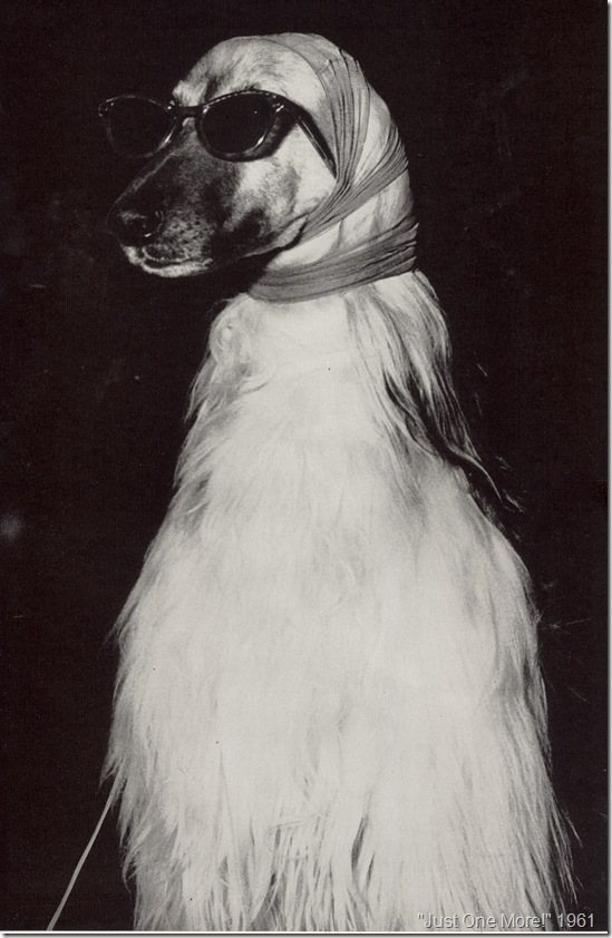 Just One More, 1961, Dog