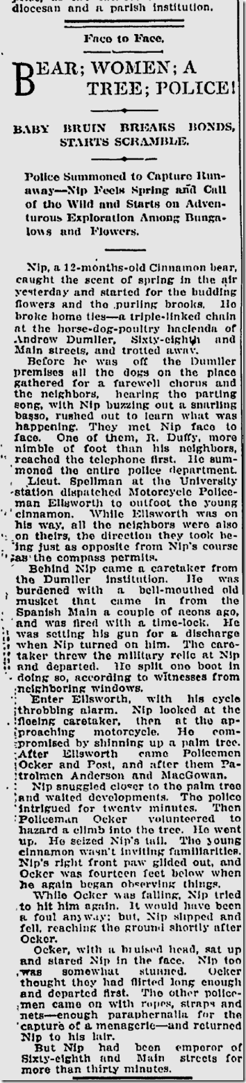 April 10, 1913, Bear Escapes