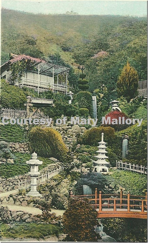 Wattles Japan. Garden