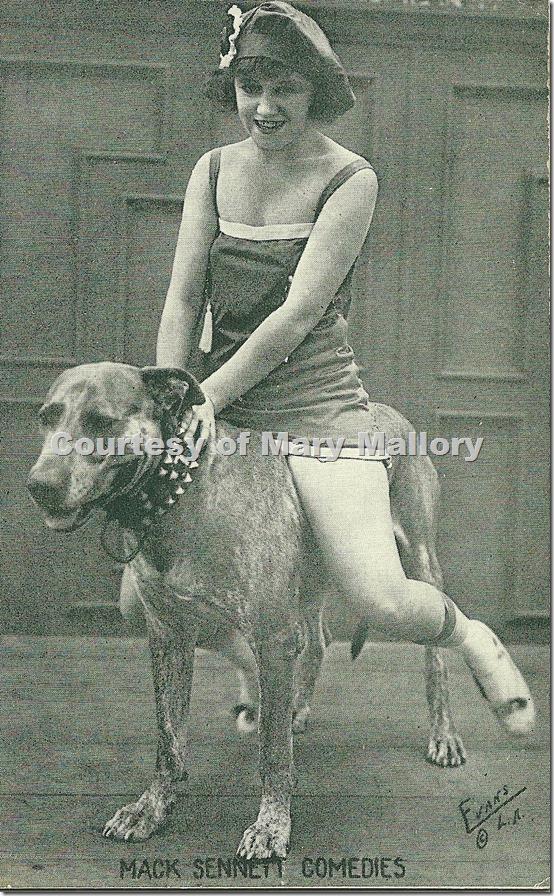 Teddy the Dog and Bath Beauty
