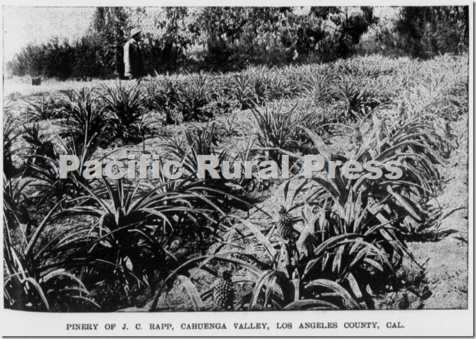 J.B. Rapp's pineapples, Pacific Rural Press