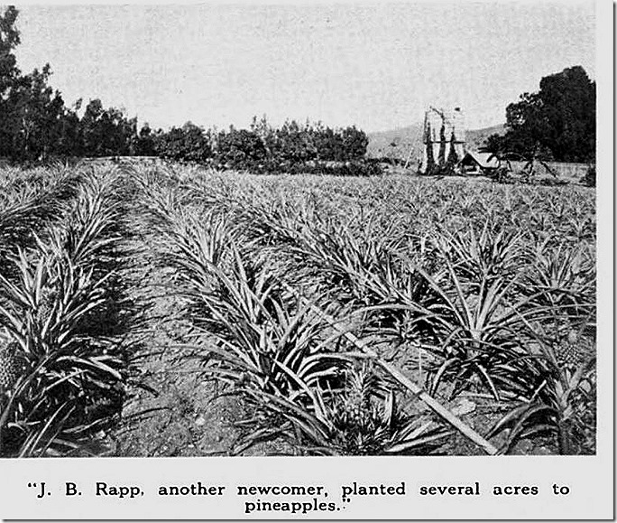 rapp_pineapples