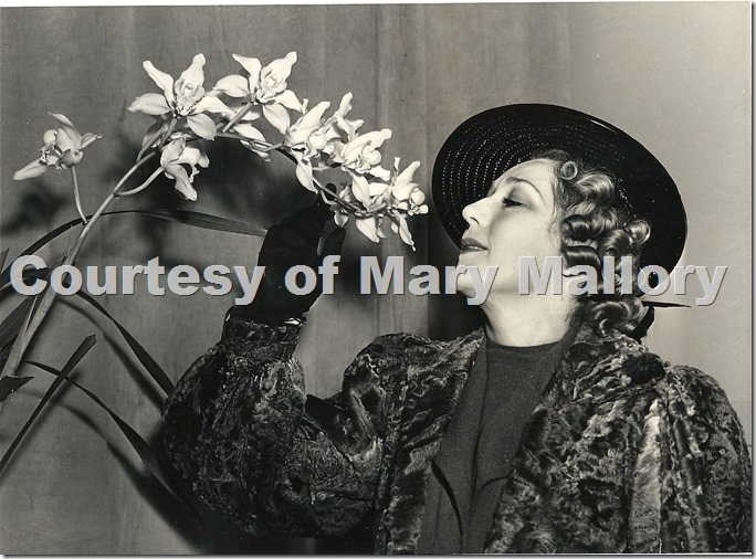 Mary Pickford Orchid