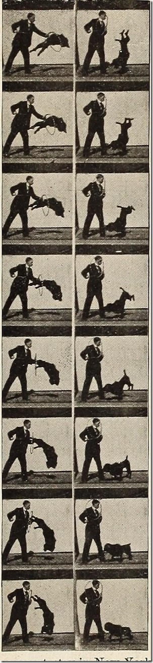 Frames from a Vitascope showing a dog jumping through a hoop